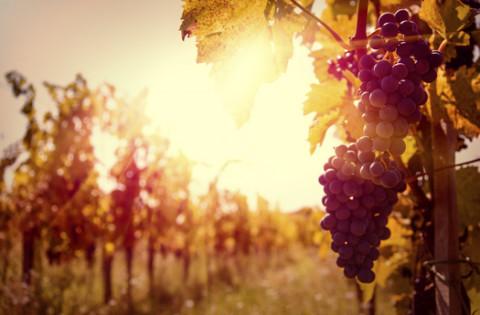 vino-emilia-romagna
