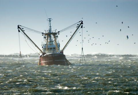 pesca-industriale