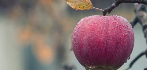 melo-frutto-bymploscar-pixabay-750x500-11225371920