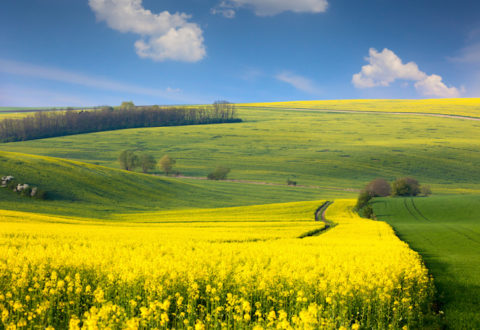 jpg20150513203315394558 Panoramic landscape of colorful yellow-green hills with ground road, blue sky and clouds