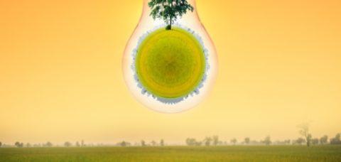 lampadina-albero-rovesciato-by-jaboofoto-adobe-stock-750x750