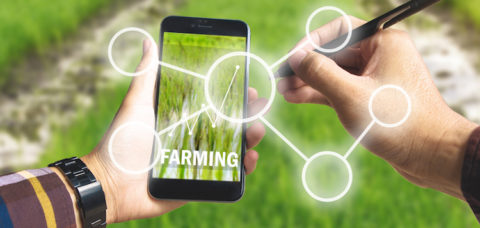 Hand holding smart phone and electronic pen with blank business icon and up trends income chart on screen over rice field background for Ecology Farming Agriculture business, Environment Concept.